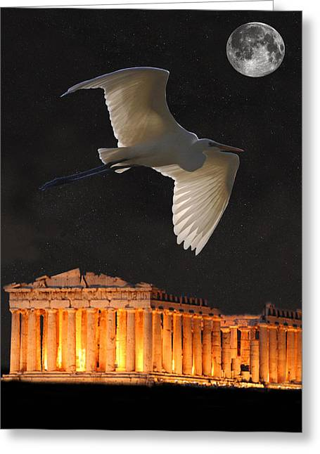 Acroplolis Greeting Cards - Great Egret Parthenon Athens Greeting Card by Eric Kempson