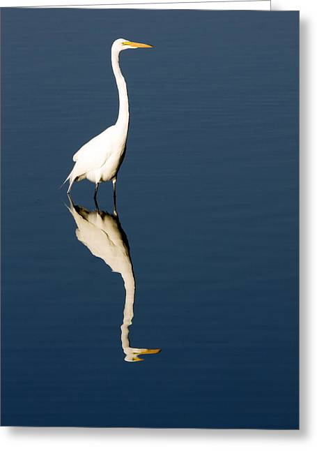 Great Egret Reflected Greeting Card by Sally Weigand