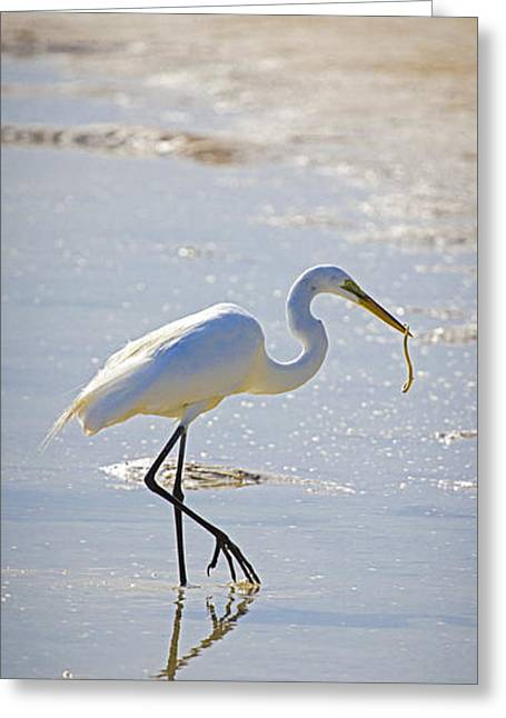 Great Egret Greeting Cards - Great Egret with prey Greeting Card by Patrick M Lynch