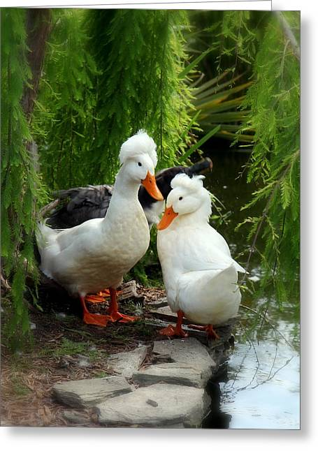 Water Fowl Photographs Greeting Cards - Bad Hair Day Greeting Card by Karen Wiles