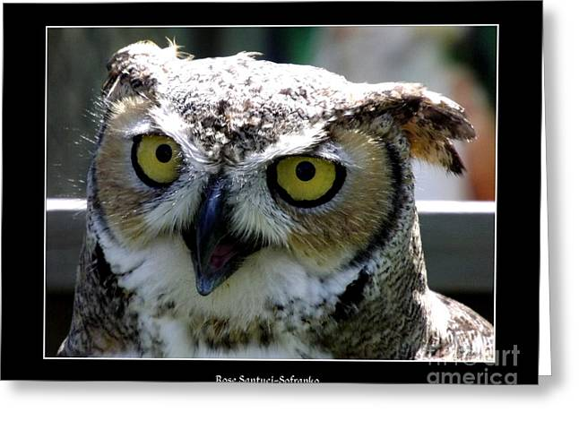 Hawk Creek Greeting Cards - Great Horned Owl 2 Greeting Card by Rose Santuci-Sofranko