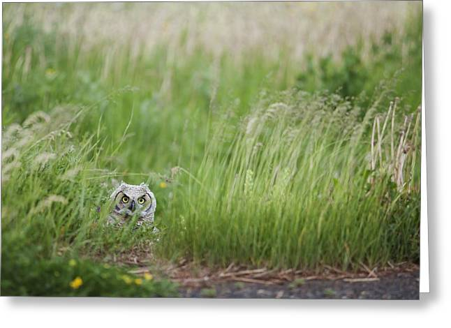 Ground Level Greeting Cards - Great Horned Owl Bubo Virginianus Greeting Card by Susan Dykstra