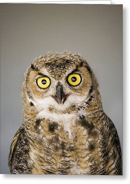 Great Horned Owl Greeting Card by Henry Georgi Photography Inc