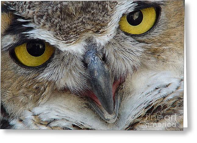 Stipple Greeting Cards - Great Horned Owl Greeting Card by Janeen Wassink Searles
