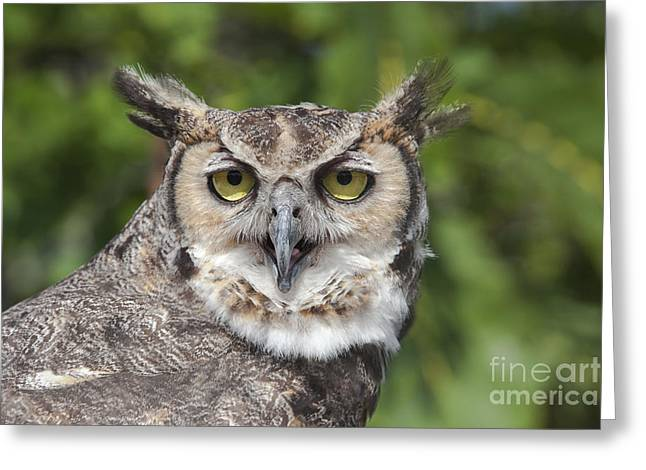 Animal Body Part Greeting Cards - Great Horned Owl Greeting Card by Keith Kapple