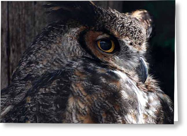Hunting Bird Greeting Cards - Great Horned Owl Greeting Card by Paul Ward