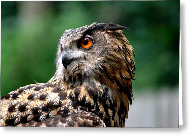Great Horned Owl Greeting Card by Ronald T Williams