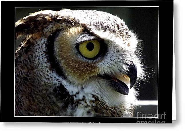 Hawk Creek Greeting Cards - Great Horned Owl Greeting Card by Rose Santuci-Sofranko