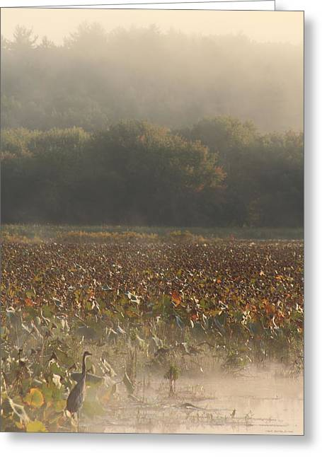 Concord Greeting Cards - Great Meadows National Wildlife Refuge Blue Heron Fog Greeting Card by John Burk