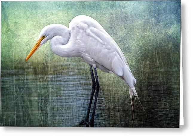 Great White Egrets Greeting Cards - Great White Egret Greeting Card by Bonnie Barry