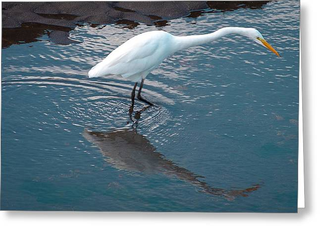 Watershed Greeting Cards - Great White Egret Greeting Card by David Patterson