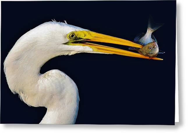 Great White Egret With His Catch Greeting Card by Paulette Thomas