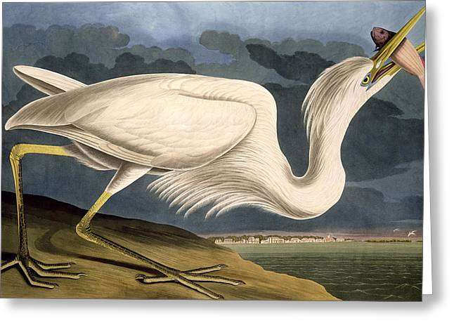 1851 Greeting Cards - Great White Heron Greeting Card by John James Audubon