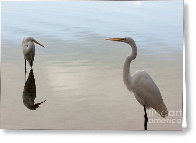 Bird Photography Greeting Cards - Great White Heron  Greeting Card by Keith Kapple