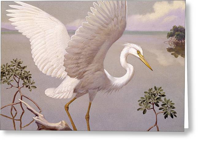 Great White Heron, White Morph Of Great Greeting Card by Walter A. Weber