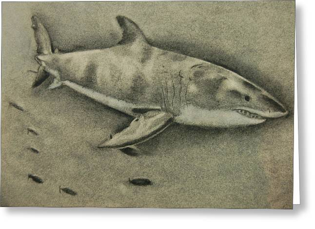 White Shark Pastels Greeting Cards - Great White Greeting Card by Tyler Hendrick