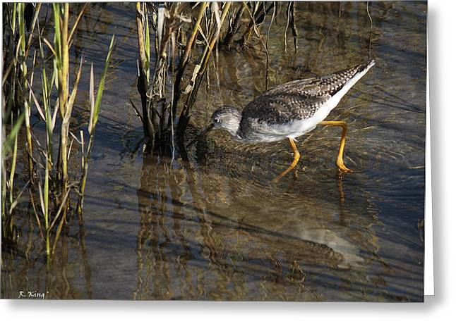 Wildlife Genre Greeting Cards - Greater Yellowlegs At SPI Greeting Card by Roena King