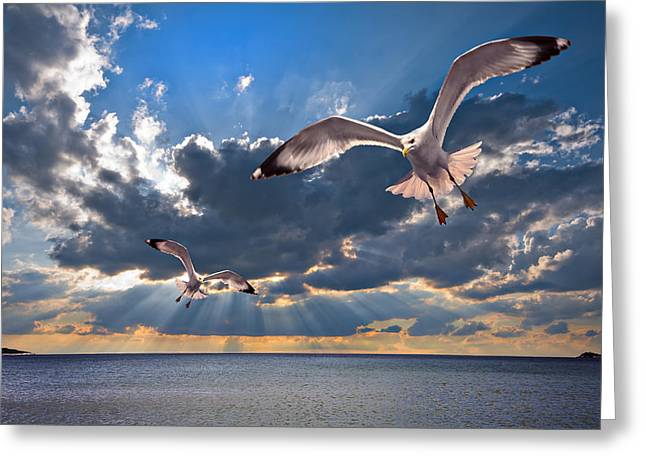 Herring Greeting Cards - Greek Gulls With Sunbeams Greeting Card by Meirion Matthias