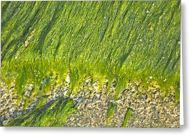 Green Algae On Rock Greeting Card by Kenneth Albin