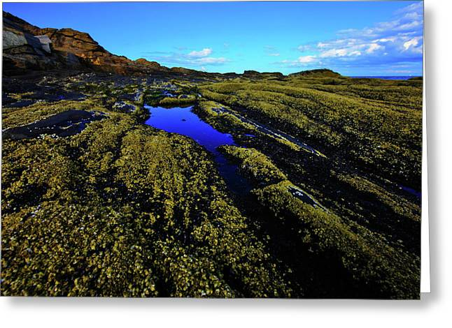 New England Ocean Greeting Cards - Green and Blue Greeting Card by Rick Berk