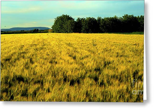 D700 Greeting Cards - Green and Gold Greeting Card by Jaco Kriek