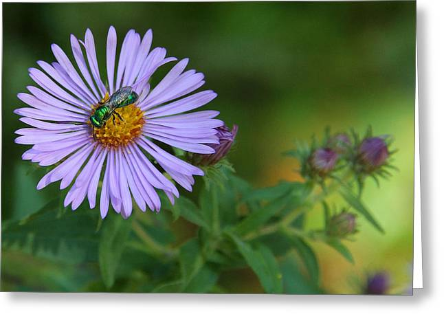 Green And Purple Greeting Card by Doris Potter