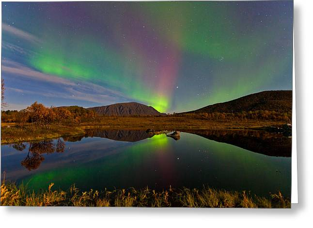 Sortland Greeting Cards - Green and purple Greeting Card by Frank Olsen