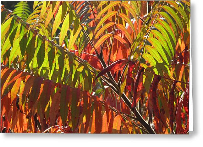 Autum Abstract Greeting Cards - Green and Red Sumach  Greeting Card by Lyle Crump