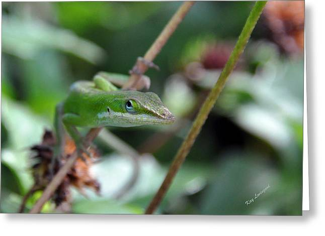 Kay Lovingood Greeting Cards - Green Anole Greeting Card by Kay Lovingood