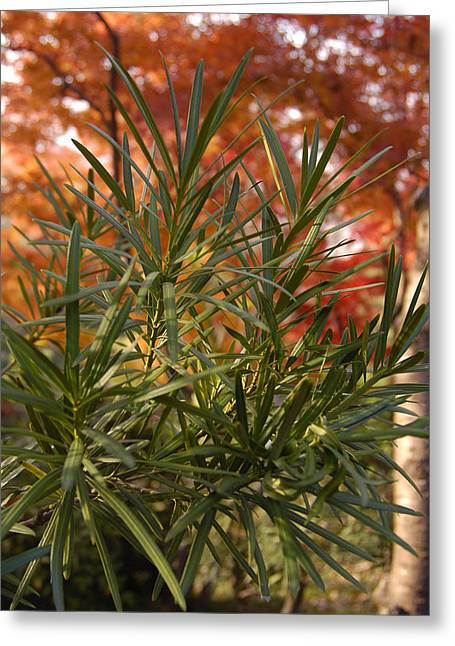 Print Greeting Cards - Green Autumn Greeting Card by Greg Kopriva
