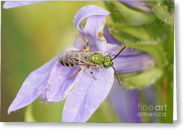 Reflections Of Infinity Llc Greeting Cards - Green Bee on Great Blue Lobelia Greeting Card by Robert E Alter Reflections of Infinity