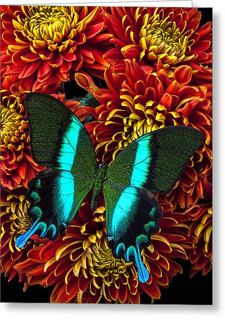 Red Bouquet Greeting Cards - Green blue butterfly Greeting Card by Garry Gay