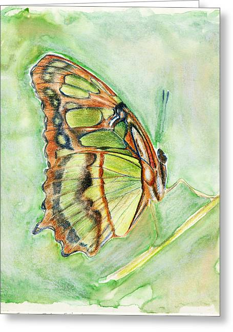 Linda Pope Greeting Cards - Green butterfly Greeting Card by Linda Pope
