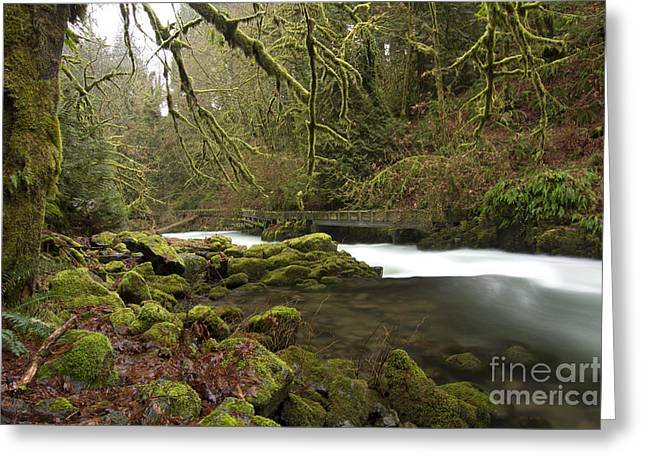 Cedar Creek Greeting Cards - Green by the River Greeting Card by Idaho Scenic Images Linda Lantzy