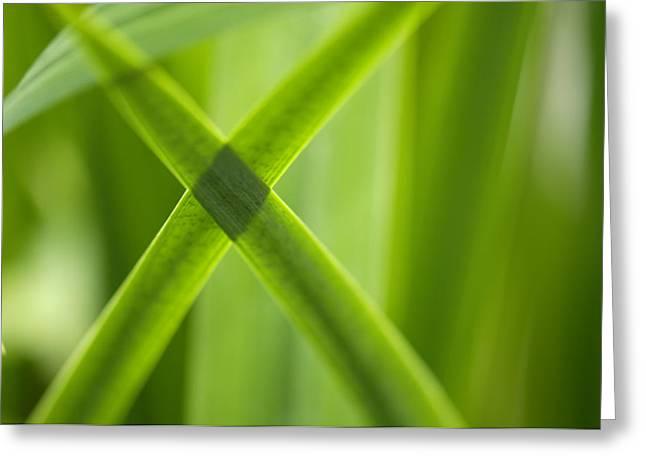 Green Crossing Greeting Card by Silke Magino