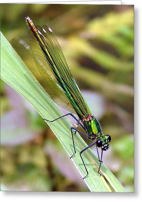 Demoiselles Greeting Cards - Green Damselfly Greeting Card by Ramona Johnston