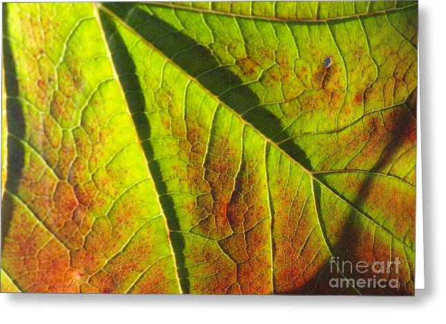 Nature Center Pond Photographs Greeting Cards - Green Days Past Greeting Card by Trish Hale