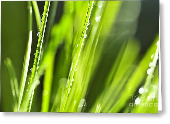 Drop Greeting Cards - Green dewy grass  Greeting Card by Elena Elisseeva