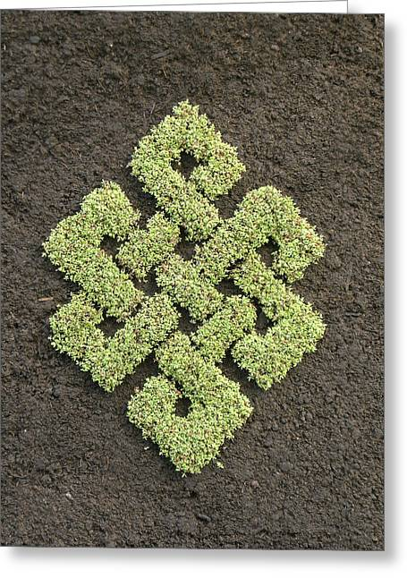 Garden Art Reliefs Greeting Cards - Green Endless Knot Greeting Card by Karl Seitinger