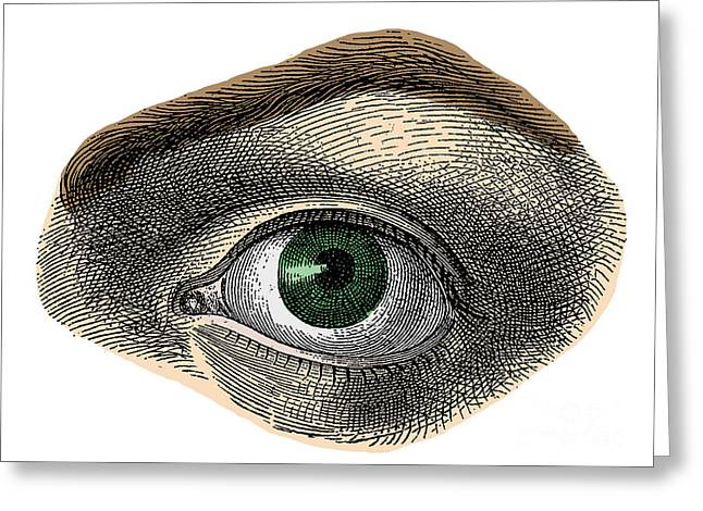 Sight See Greeting Cards - Green Eye Greeting Card by Science Source