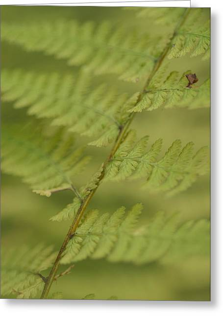 Coastal Maine Greeting Cards - Green Ferns Blend Together Greeting Card by Heather Perry