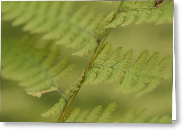 Green Ferns Blend Together Greeting Card by Heather Perry