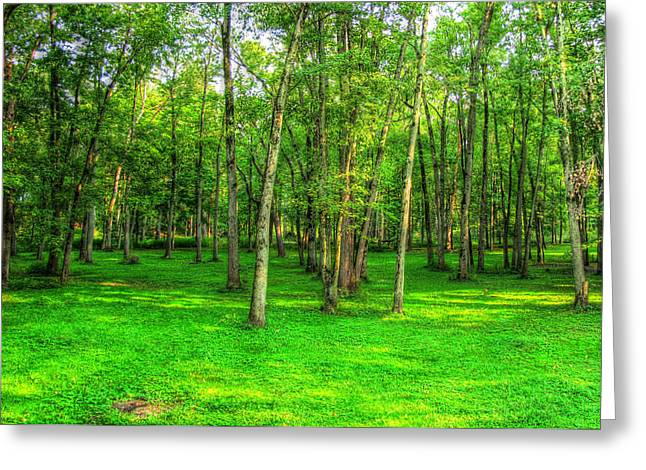 Moss Green Pastels Greeting Cards - Green Floored Forest Greeting Card by Jackie Novak