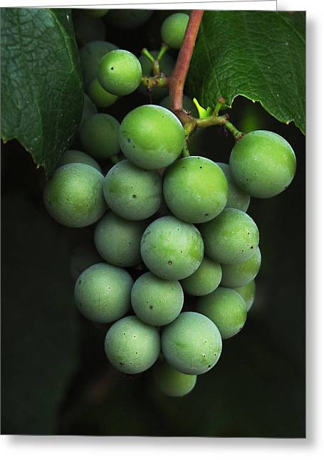 Fruits Photographs Greeting Cards - Green Grapes Greeting Card by Marion McCristall