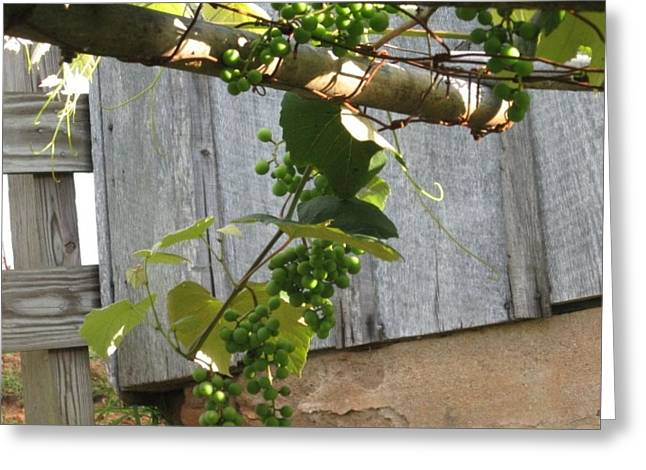 Concord Grapes Greeting Cards - Green Grapes on Rusted Arbor Greeting Card by Deb Martin-Webster