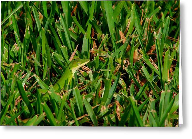 Green Grass Guise Greeting Card by April Wietrecki Green
