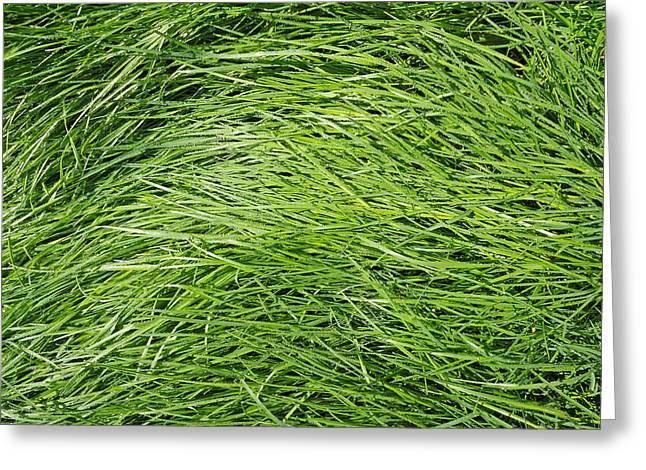 Dewdrops Greeting Cards - Green grass in the morning Greeting Card by Matthias Hauser