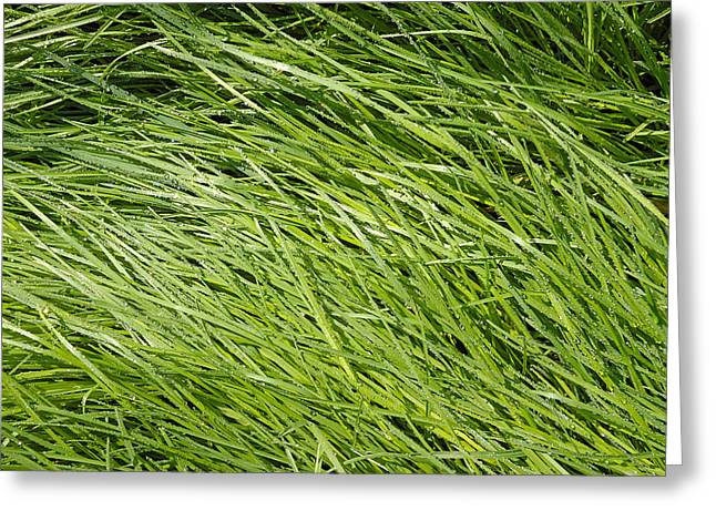Dewdrops Greeting Cards - Green Grass Greeting Card by Matthias Hauser