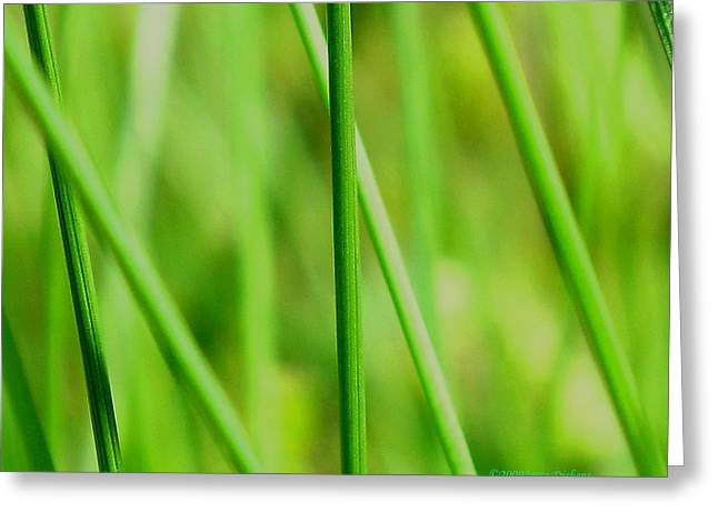 Abstract Wall Art Greeting Cards - Green Green Grass Of Home Greeting Card by Joyce Dickens