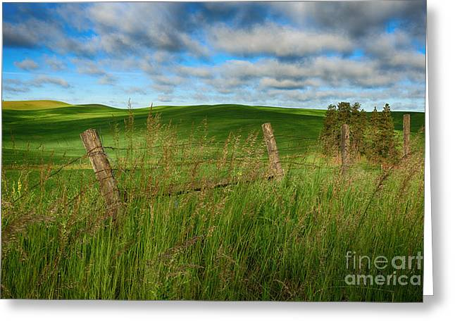 © Beve Brown-clark Greeting Cards - Green Green grass of Home Greeting Card by Reflective Moments  Photography and Digital Art Images